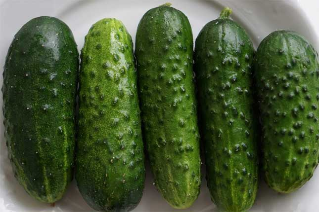 Northern-Pickling-Cucumbers