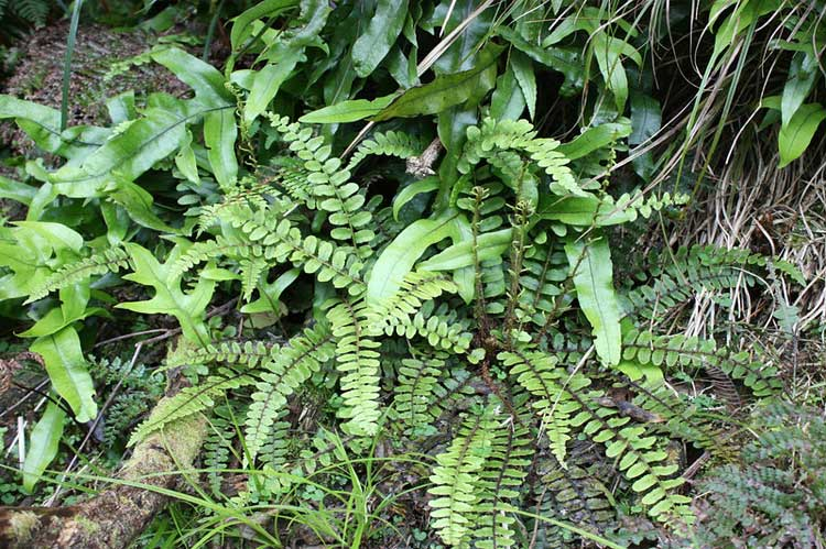 Various types of ferns