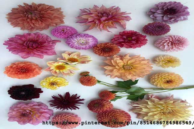 Colorful Flowers That Add Color To Your Home