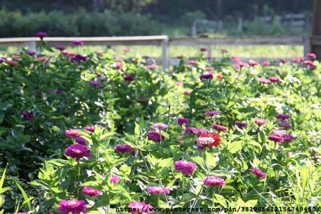 Incredible-Easy-Tips-For-Growing-Cut-Flowers-Gardens
